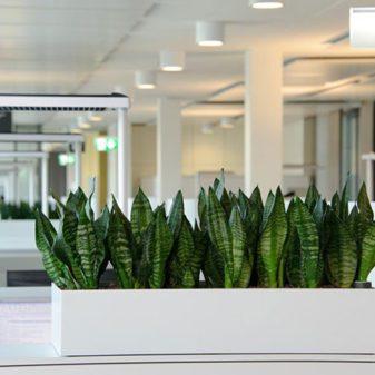 5 biljaka za kancelariju koji će vam unaprediti karijeru